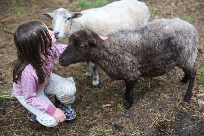 Shear-3-2