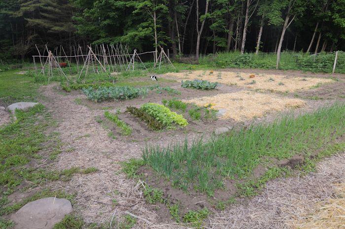 Gardenjune20-14
