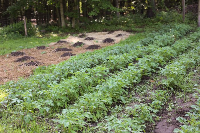 Gardenjune13-4