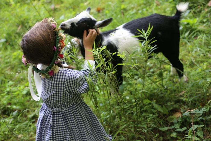 Goats-12