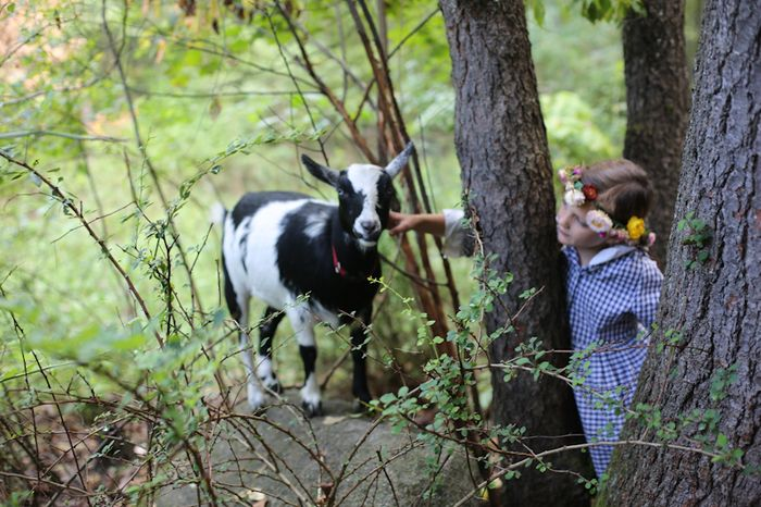 Goats-9