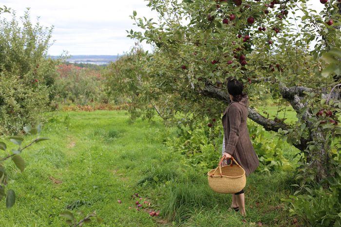 Apples-14