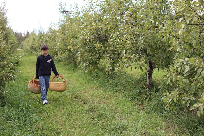 Apples-5