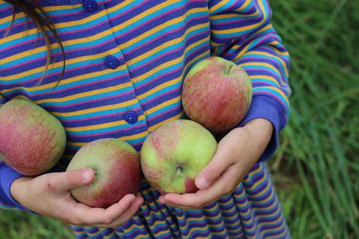 Apples-12