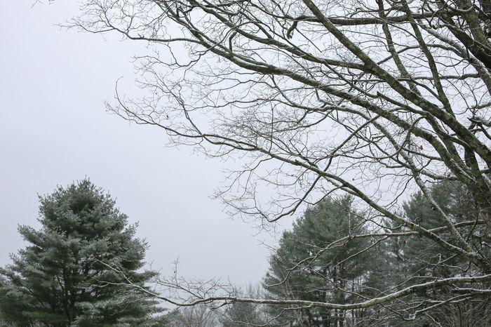 Snow-2-2