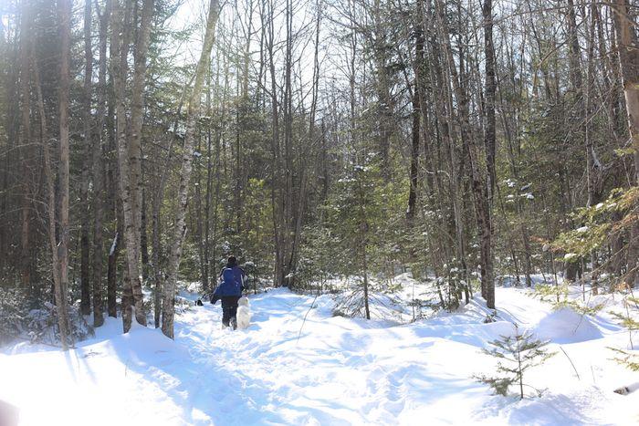 Woodswalk-7