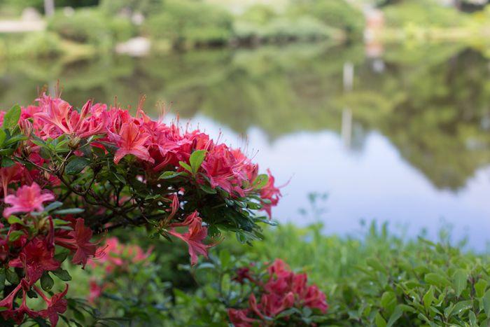 Gardens-7