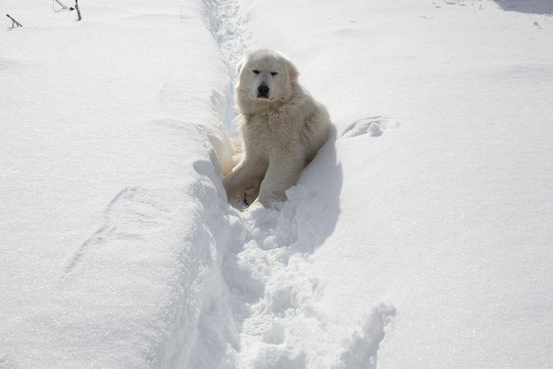 Snowystate-8