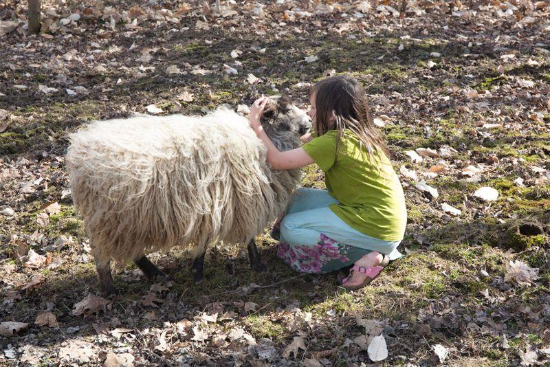 Sheep-10