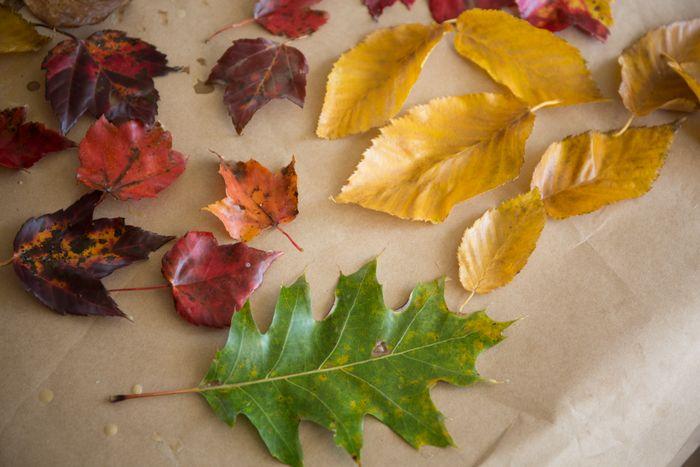 Leaves-1-14