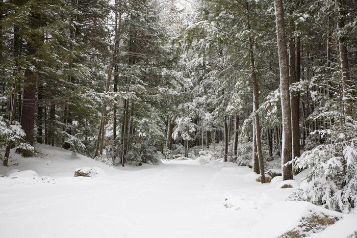 Woodsblog-25