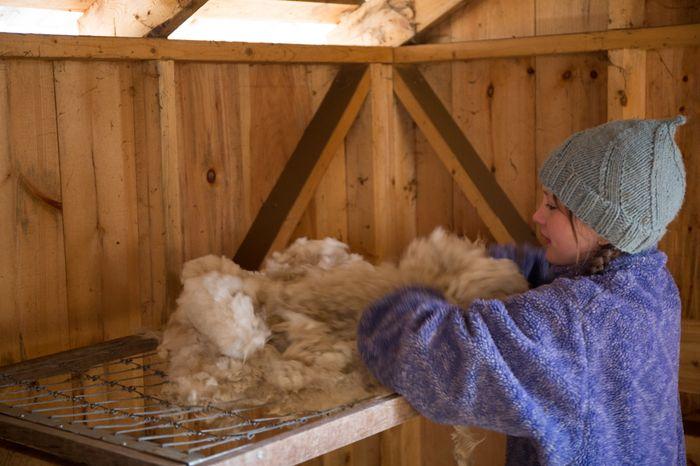 Shear-20