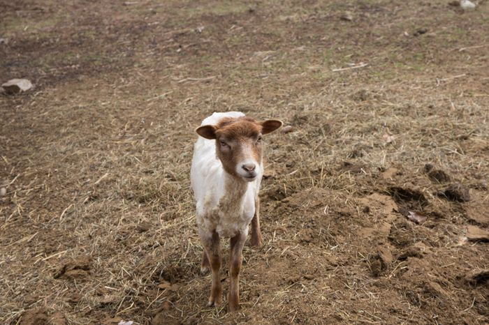 Shear-21