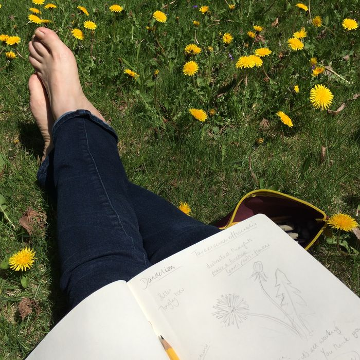 Sketching in the garden