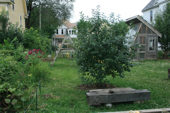 Fruit-trees-flowers-and-coop
