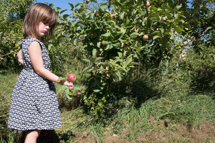 Apples-16