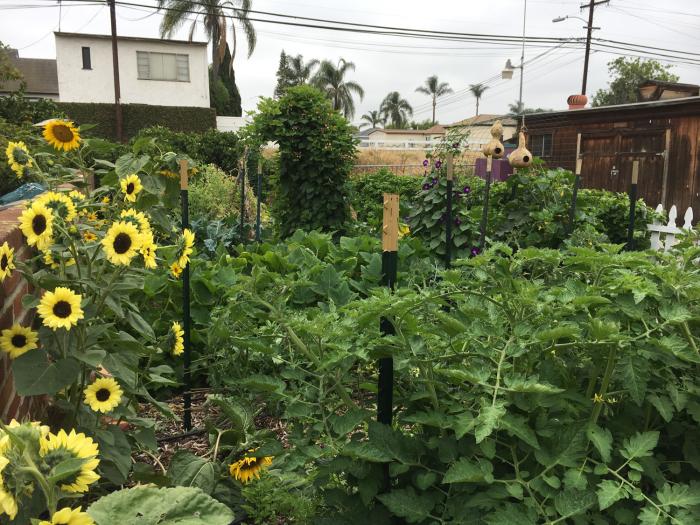 Gardenrachel-4