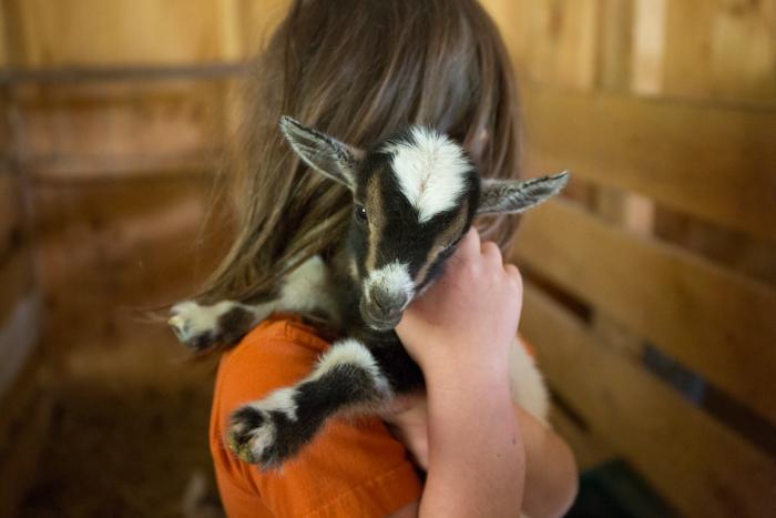 Goats-1-3