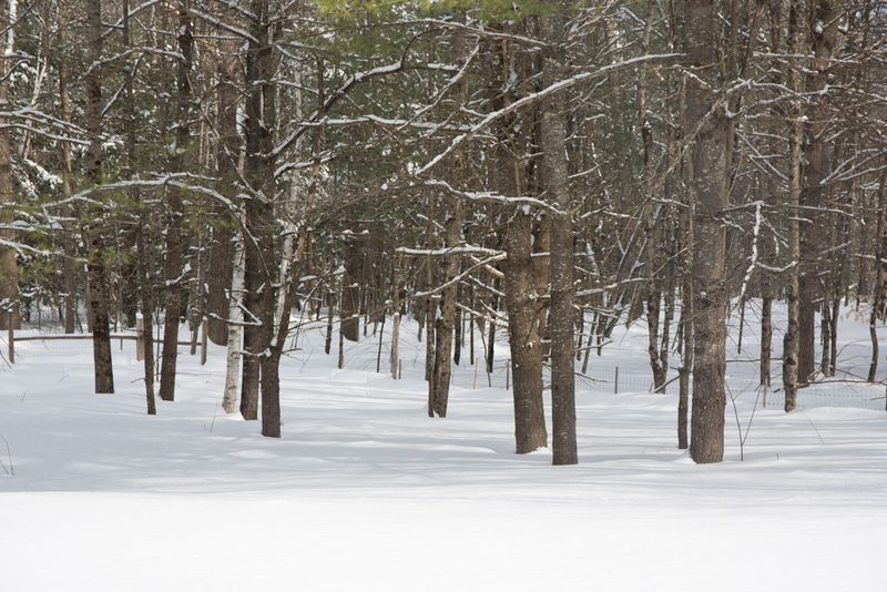 Snowystate-7