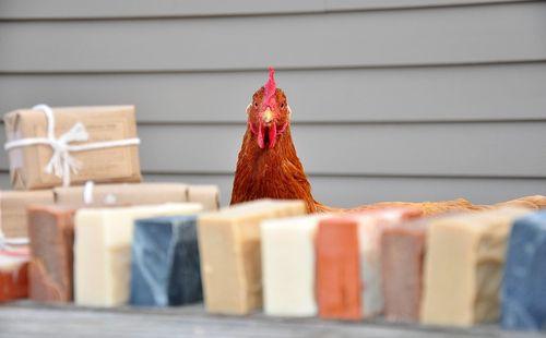 Cobble-hill-farm-apothecary-chicken-soap