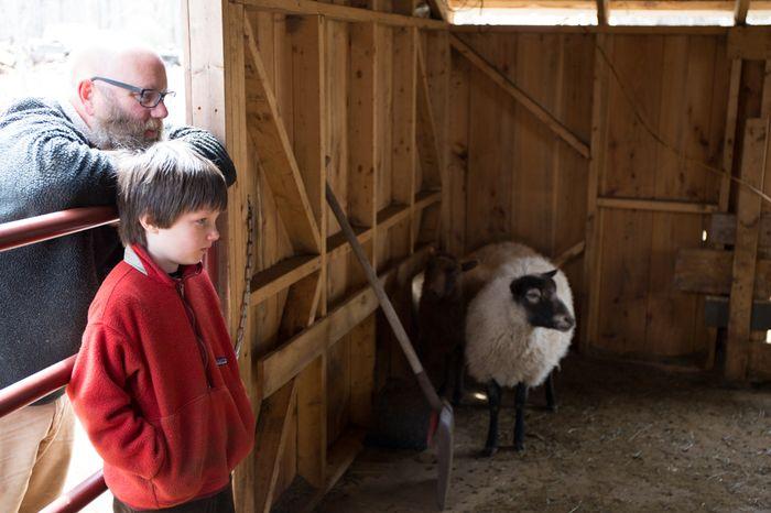 Shear-11