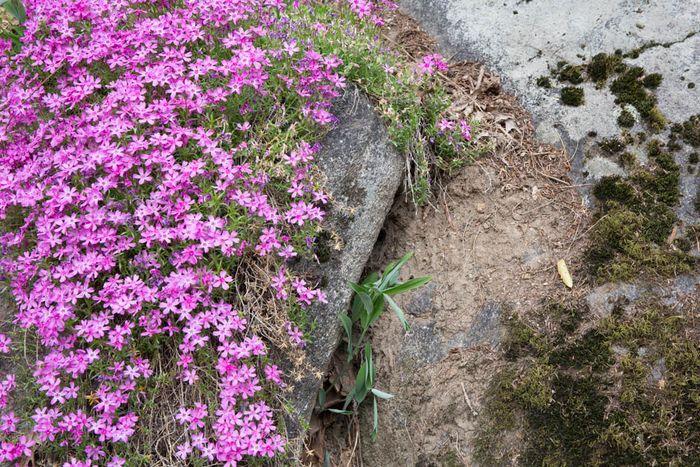 Botanical-12