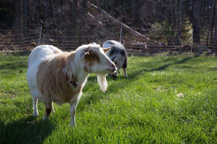 Pasture-3