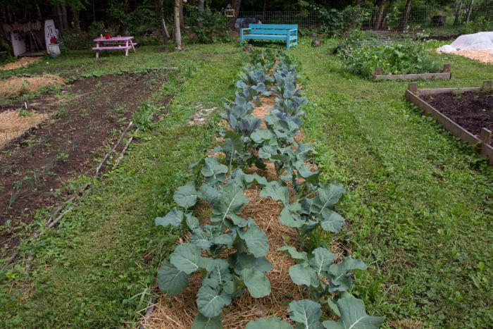 Garden23-8