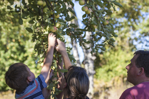 Picking-apples-fabula