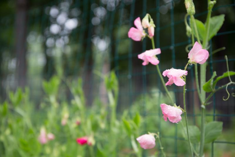 Garden-6
