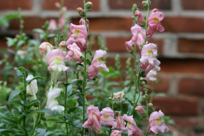 Gardenrachel-10