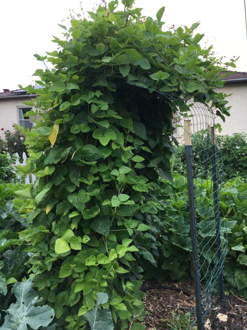 Gardenrachel-5