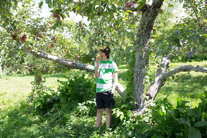 Apples-1-3