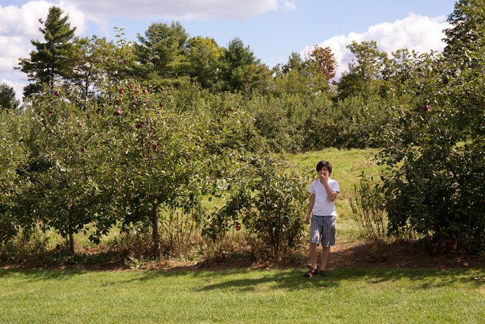 Apples-1-9