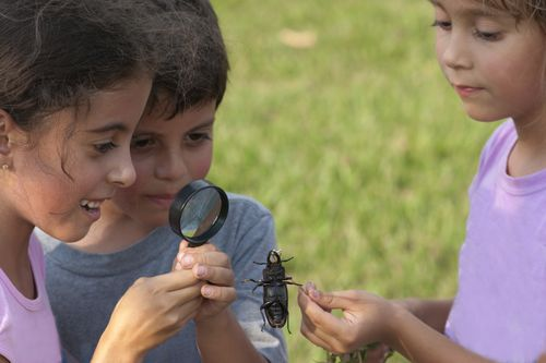 Kids-with-bugs