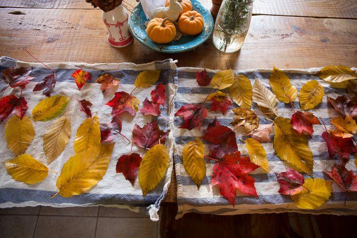Leaves-1-6