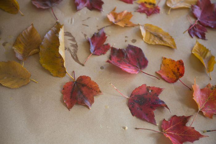 Leaves-1-11