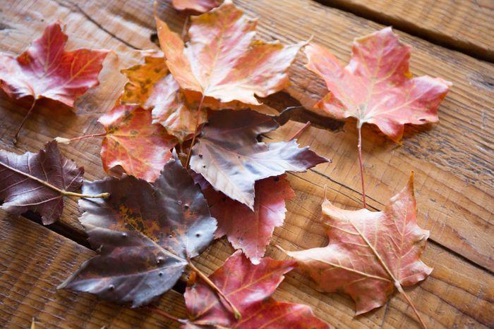 Leaves-1-5