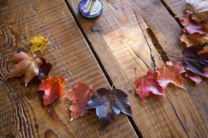 Leaves-1-7