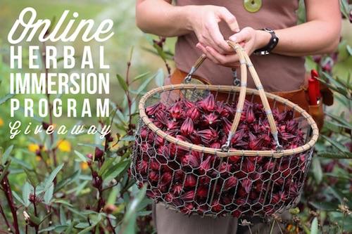Online Herbal Immersion Program