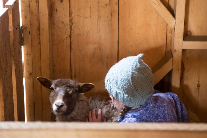 Shear-18