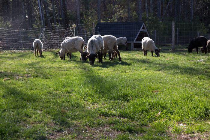 Pasture-4