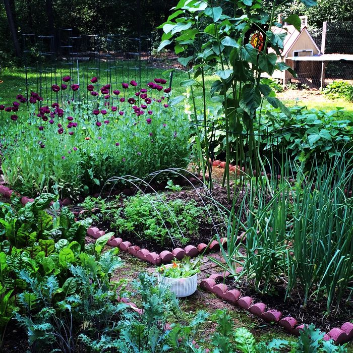 Summer veggie garden in full glory