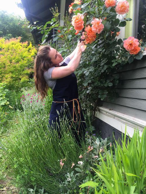 Rachel_pruning