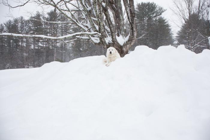 Snow-1-10