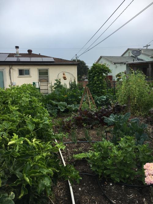Gardenrachel-1