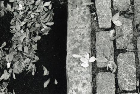 Fallfilm2