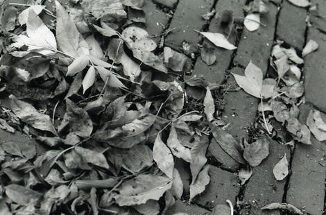 Fallfilm4